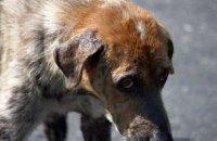В Севастополе бродячая собака укусила дочь спикера МИД России