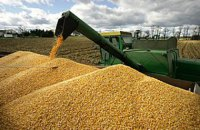 Мінекономіки погіршило прогноз урожаю зерна через засуху