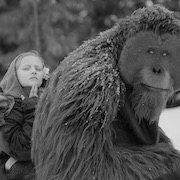 """""""Війна за планету мавп"""": примат людяності"""