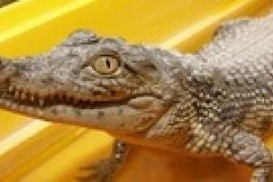 В одесском пруду обнаружили крокодилов