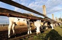 В Запорожской области обнаружили вирус сибирской язвы