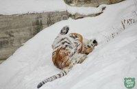 Киевский зоопарк показал, как животные реагируют на снег