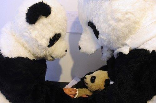 Працівники зоопарку в костюмах панд із панденям Тао Тао