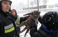 В Каменце-Подольском спасатели сняли с дерева кота