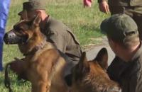 Во Львовской области прошли соревнования служебных собак Нацгвардии
