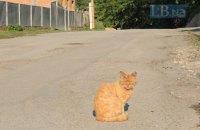 Мешканець Полтавської області отримав шість років в'язниці за знущання над котом