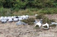 В лесополосе в Луганской области полиция обнаружила 150 кг марихуаны
