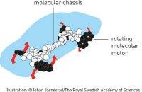 Нобеля по химии получили создатели молекулярных машин