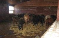 В частном мини-зоопарке под Киевом от голода умер конь