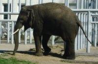 В зоопарке Харькова слониха покалечила работника