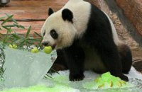 Пятничная панда #159