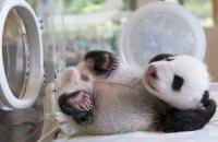 Пятничная панда #167