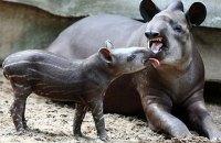 В Венесуэле из зоопарка украли несколько животных, вероятно, чтобы съесть