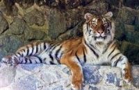 Учені допоможуть урятувати бенгальських тигрів