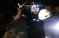 У Київській області через падіння дерева загинула жінка
