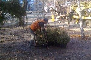 Донецкие власти на месте палаток чернобыльцев срочно сажают елки