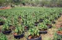В Австрии ловец покемонов нашел сад с марихуаной