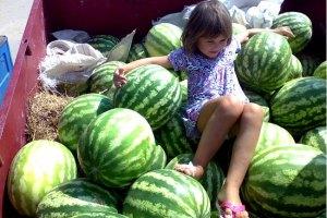 В Україні побільшає кавунів і динь, - прогноз