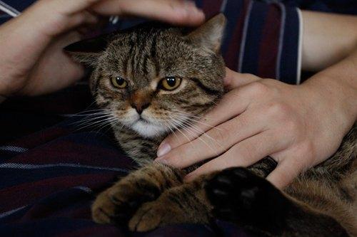 Кот по имени Дядя Фёдор от читателей LB.ua