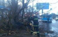 На 11-річну дівчинку у Вінниці впало дерево
