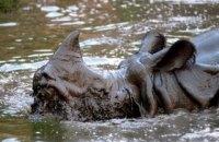 Повені в Індії: 40 людей загинули, під загрозою рідкісний вид носорогів