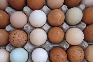 В Германии в куриных яйцах обнаружили диоксин