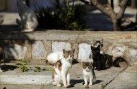 Японские ученые заявили, что коты могут заражаться коронавирусом друг от друга
