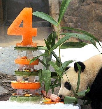 А на цьому фото своє чотириріччя святкує гігантська панда Інг Інг в Океанічному парку в Гонконгу 9 серпня 2009 року