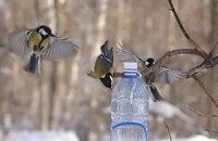 Украинцев просят покормить птиц