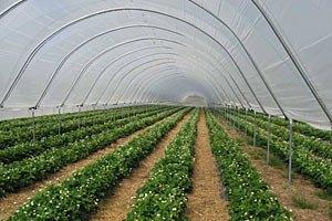 Фірташ відкрив найбільший тепличний комплекс в Україні