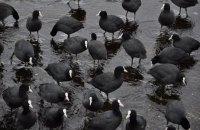 В Херсонской области обнаружили около 5 тыс. погибших диких птиц