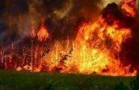 В Чили в результате лесных пожаров уничтожен город