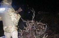 Двое украинцев и белорус собирали рога диких животных в Чернобыльской зоне