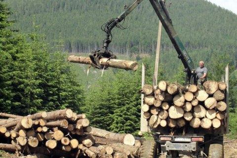 В Карпатах прекращается сплошная вырубка леса, - глава Гослесагентства