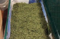 Одеський суд закрив справу про контрабанду трьох тонн марихуани під виглядом бананів 2000 року
