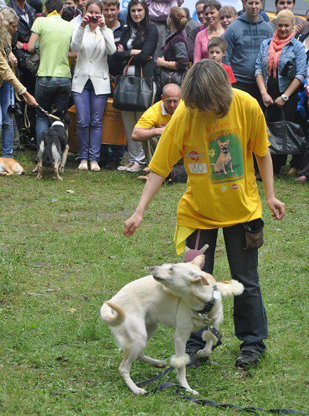 Хозяйка Санты Ирина не только подобрала двух псов, но и участвует в различных акциях помощи бездомным животным