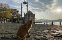 Турция с 15 мая отменила ПЦР-тесты для туристов из Украины