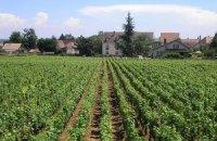 Более половины виноградарских хозяйств на грани банкротства – Ассоциация виноградарей и виноделов