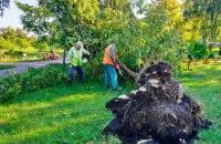 Через негоду в Києві повалено понад 350 дерев