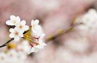 """""""Укрзалізниця"""" призначила додаткові потяги в Ужгород через цвітіння сакури"""