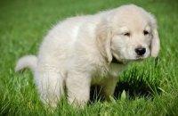 Близнюк хочет конфисковывать собак за экскременты на улице