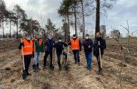 """На месте выжженного леса возле метро """"Лесная"""" в Киеве высадили новые деревья"""