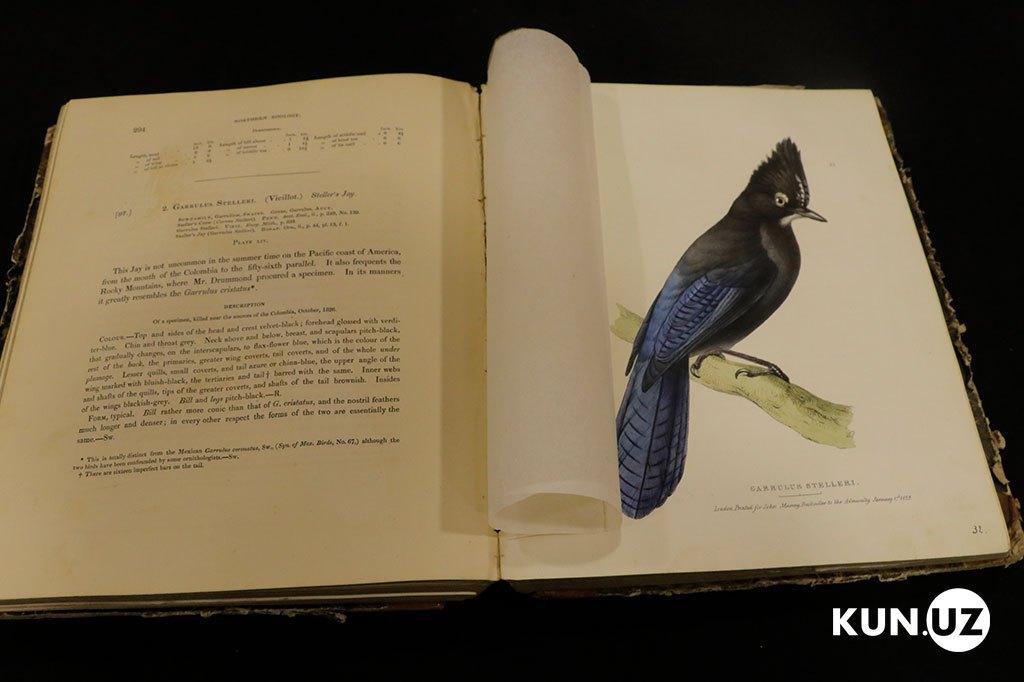 Книга о птицах Америки 1830 года. Предварительная стоимость около 150000 долларов США. Таких книг обнаружено 4