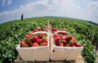 Польша смягчила карантин для сезонных работников из Украины и Беларуси