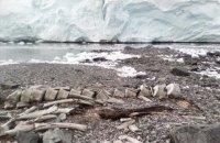 """Ученые определили возраст кита, скелет которого нашли возле станции """"Академик Вернадский"""""""
