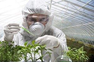 Україна шукає ГМО в насінні через скандал у Європі