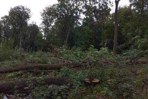 """Після бійки """"тітушок"""" з місцевими і поліцією в Бучі забудовник усе-таки вирубав ліс"""