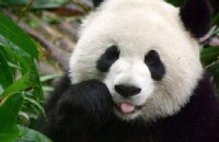 Пятничная панда #66