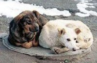 УЕФА стурбоване тим, що в Україні вбивають собак заради футболу