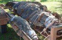 Австралийские рейнджеры поймали крупнейшего крокодила в истории региона